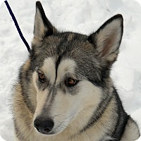 Adopt A Pet :: LAYLA-Adoption Pending - Boise, ID