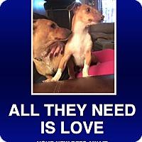 Adopt A Pet :: Daniel & Sabrina - Morrisville, PA