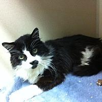 Adopt A Pet :: Koki - Palos Verdes Estates, CA