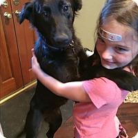 Adopt A Pet :: MOLLY (Courtesy List) - San Pedro, CA
