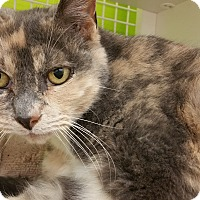 Adopt A Pet :: Indie - Middletown, CT