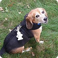 Adopt A Pet :: Jelly - Yardley, PA