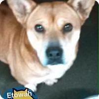 Adopt A Pet :: Lady (Sadie) - Boston, MA