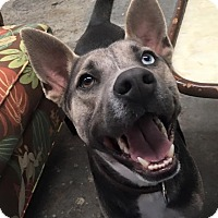 Adopt A Pet :: Toby - Ocean Ridge, FL