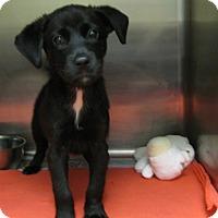 Adopt A Pet :: Jetta - Groton, MA