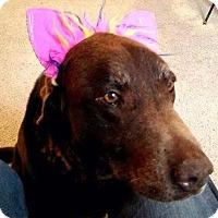 Adopt A Pet :: Hal - Meridian, ID