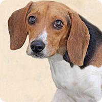 Adopt A Pet :: Tonto - Encinitas, CA