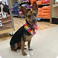 Adopt A Pet :: Nohealani - Waipahu, HI