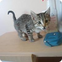 Adopt A Pet :: Canoli - Montello, WI