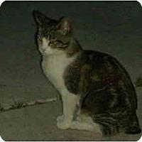 Adopt A Pet :: Bob - Washington Terrace, UT