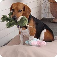 Adopt A Pet :: Ernie - Novi, MI