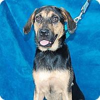 Adopt A Pet :: Natalie - Bradenton, FL