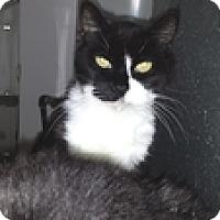 Adopt A Pet :: Phantom - Vancouver, BC