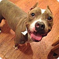 Adopt A Pet :: Little Girl - Dayton, OH