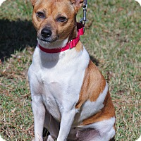 Adopt A Pet :: Maggie - Conyers, GA