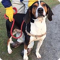 Adopt A Pet :: Finn - Edisto Island, SC