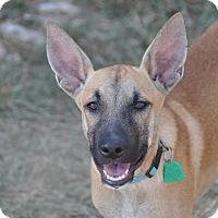 Adopt A Pet :: Dalton - Dripping Springs, TX