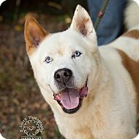 Adopt A Pet :: Banjo - Zanesville, OH
