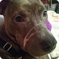 Adopt A Pet :: Hazel - Villa Park, IL