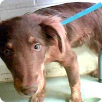 Adopt A Pet :: TERRA MAY - Conroe, TX