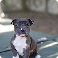 Adopt A Pet :: Vail - San Antonio, TX