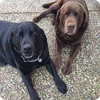 Adopt A Pet :: Georgia - San Francisco, CA