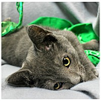Adopt A Pet :: Timmy - Forked River, NJ