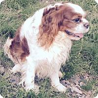 Adopt A Pet :: SIR RASCAL BARKLEY - Waldron, AR