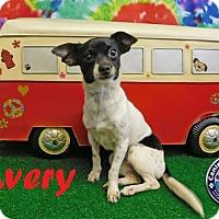 Adopt A Pet :: Avery - Arcadia, FL