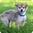 Adopt A Pet :: Mustang