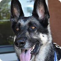Adopt A Pet :: Travis - Greensboro, NC