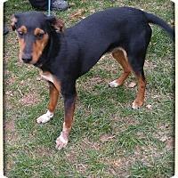 Adopt A Pet :: Bailey - oxford, NJ