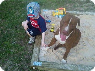 Staffordshire Bull Terrier Dog for adoption in Jasper, Tennessee - Bo