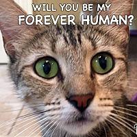 Adopt A Pet :: Rio - Spring Branch, TX