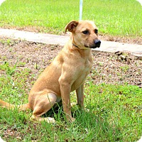 Adopt A Pet :: Peaches - Oakdale, LA