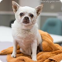 Adopt A Pet :: Wanda - Oakland, CA