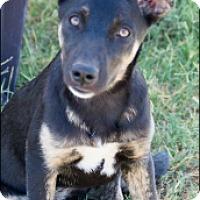 Adopt A Pet :: Malina - Patterson, CA