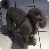 Adopt A Pet :: Kimmie - San Antonio, TX