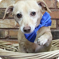 Adopt A Pet :: Barry - Benbrook, TX