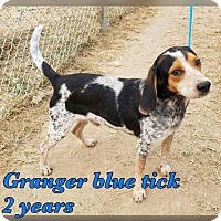 Bluetick Coonhound Mix Dog for adoption in NYC, New York - Granger