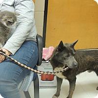 Adopt A Pet :: Grayson - Boston, MA