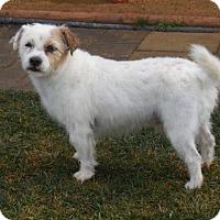 Adopt A Pet :: Lefty - Anaheim, CA