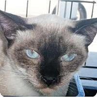 Adopt A Pet :: Teri - Pasadena, CA
