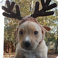 Adopt A Pet :: Hawkeye - Cheshire, CT