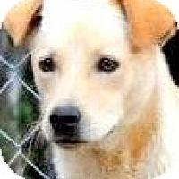 Adopt A Pet :: TRUCKER ..TANTALIZING LAB PETI - Wakefield, RI