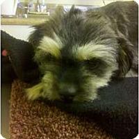 Adopt A Pet :: Mollie May - Columbia, SC