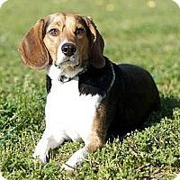 Adopt A Pet :: Rascal - Novi, MI