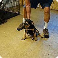 Adopt A Pet :: Sally - Conway, AR