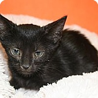 Adopt A Pet :: SYDNEY - SILVER SPRING, MD