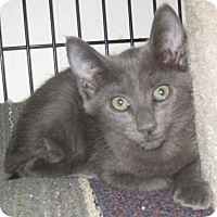 Adopt A Pet :: Tatianna - Dallas, TX